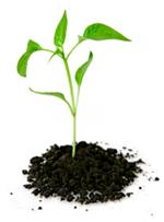 fresh-plant-2